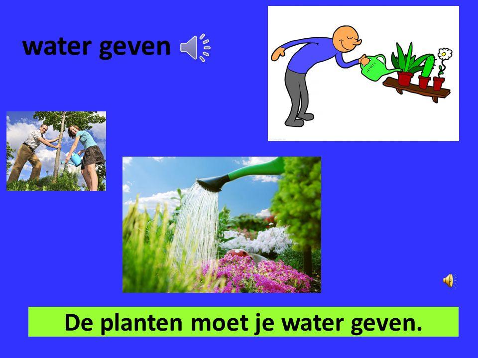 De planten moet je water geven.