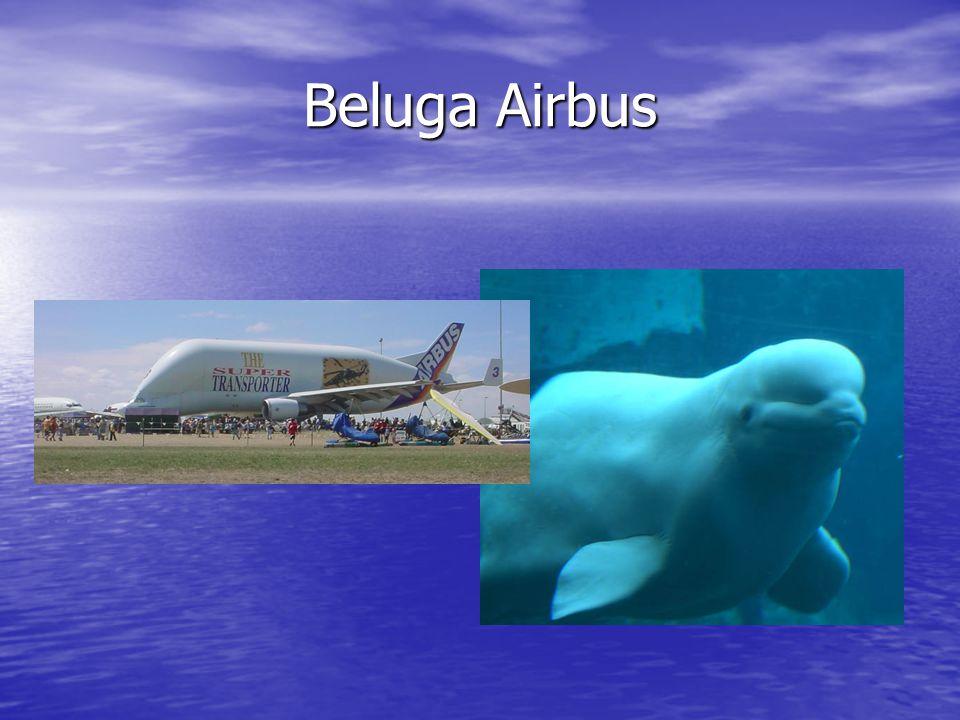 Beluga Airbus Beluga: van beluga walvis Kan hele romp in (niet A380!)