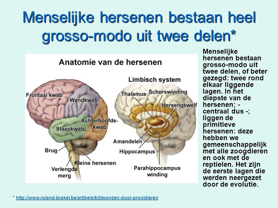 Menselijke hersenen bestaan heel grosso-modo uit twee delen*