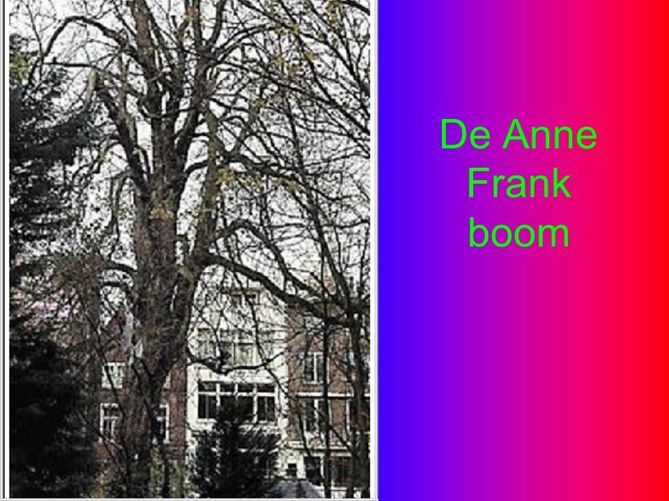 De Anne Frank boom