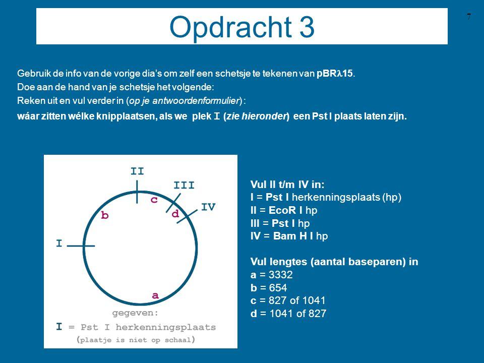 Opdracht 3 Vul II t/m IV in: I = Pst I herkenningsplaats (hp)