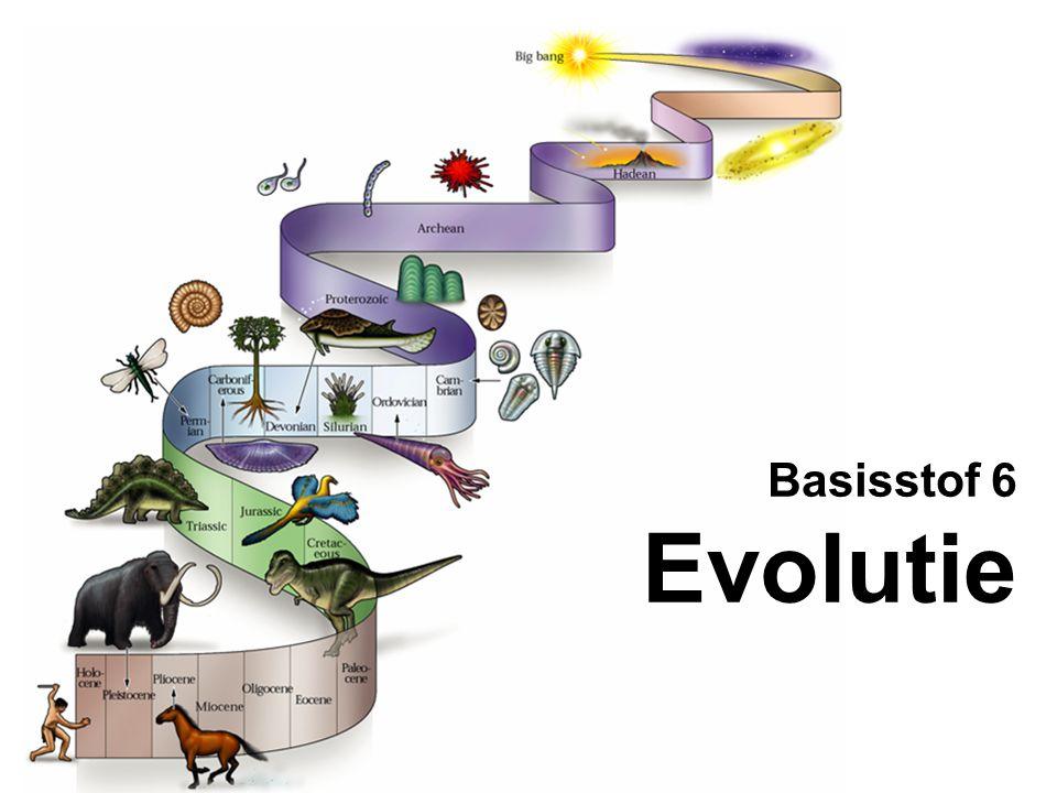 Basisstof 6 Evolutie