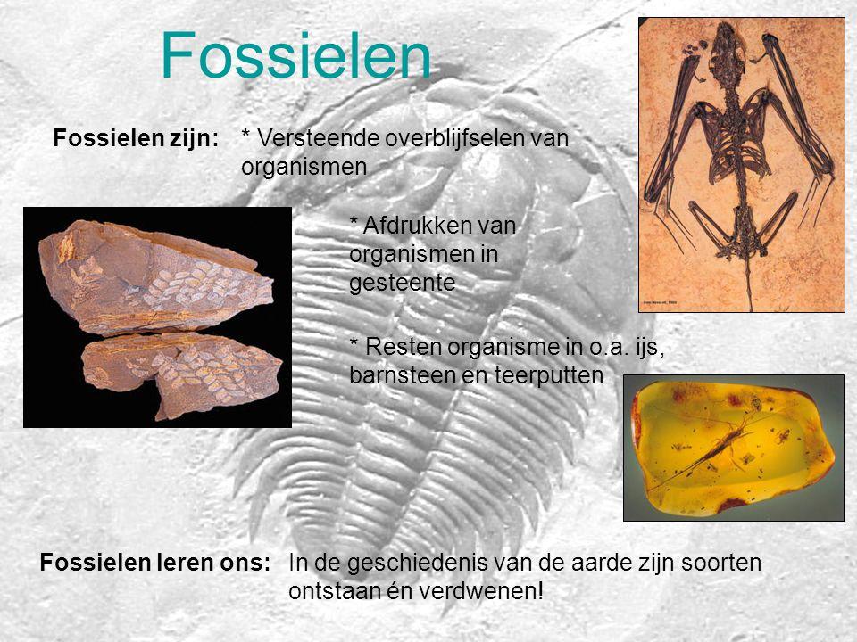 Fossielen Fossielen zijn: * Versteende overblijfselen van organismen