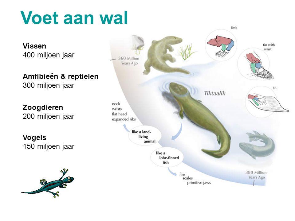 Voet aan wal Vissen 400 miljoen jaar Amfibieën & reptielen