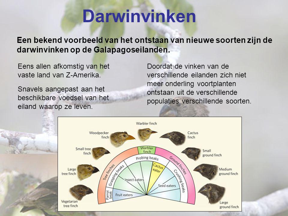 Darwinvinken Een bekend voorbeeld van het ontstaan van nieuwe soorten zijn de darwinvinken op de Galapagoseilanden.