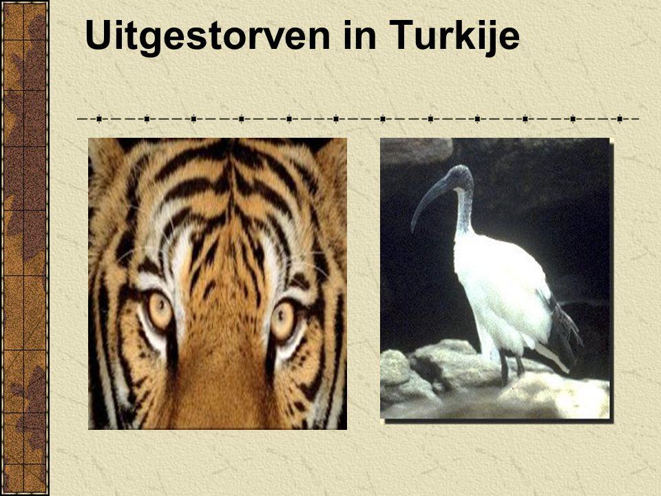 Uitgestorven in Turkije
