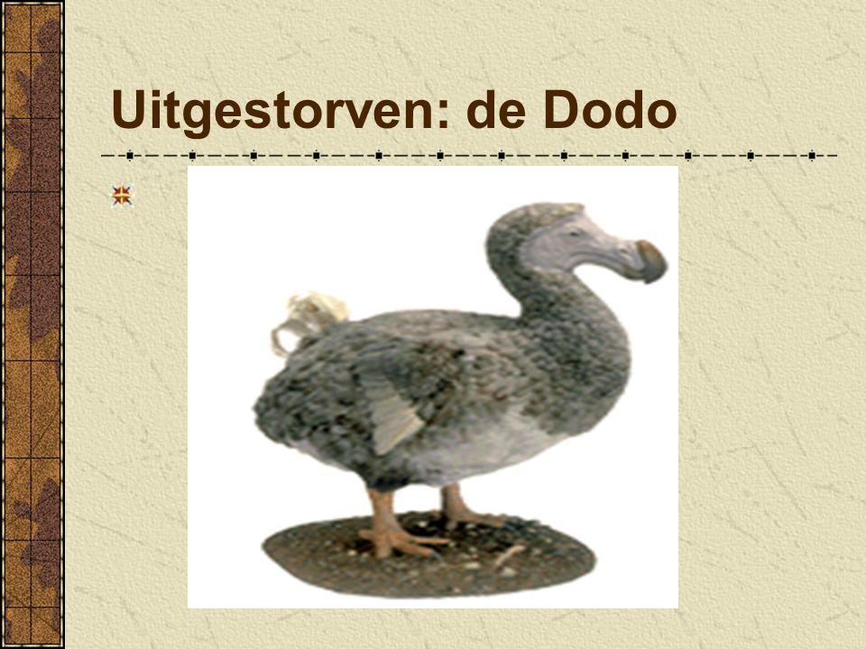Uitgestorven: de Dodo Zonder bescherming sterven dieren uit.