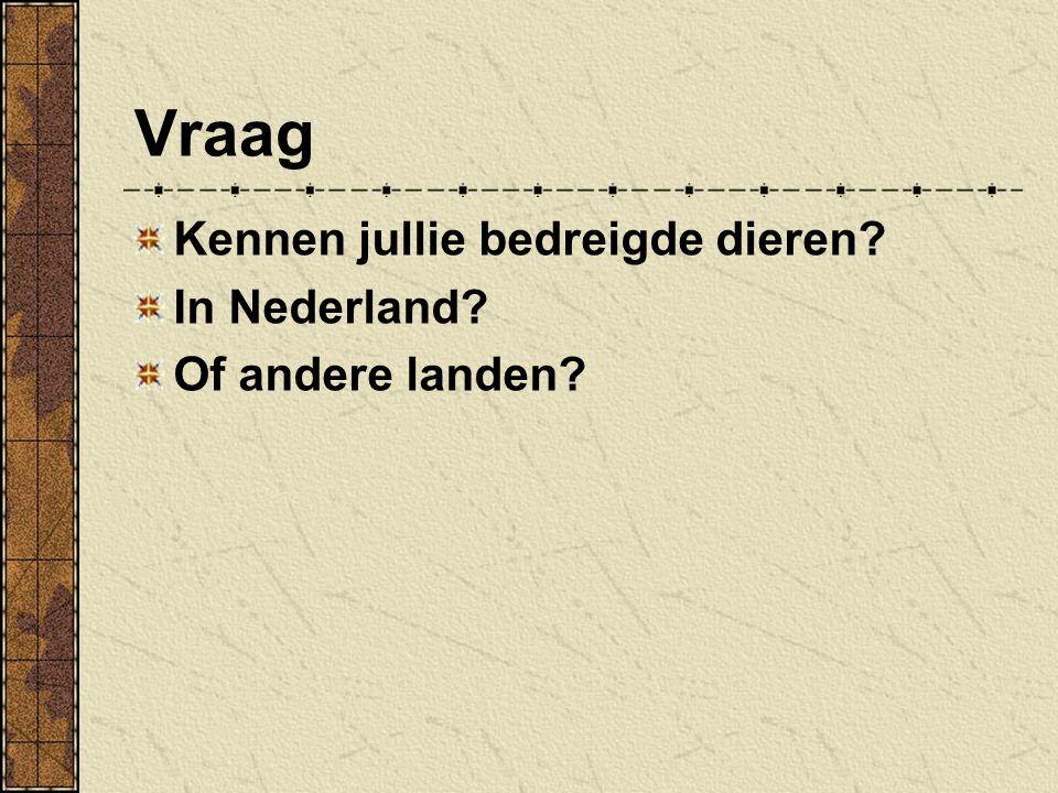 Vraag Kennen jullie bedreigde dieren In Nederland Of andere landen