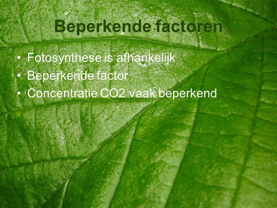 Beperkende factoren Fotosynthese is afhankelijk Beperkende factor