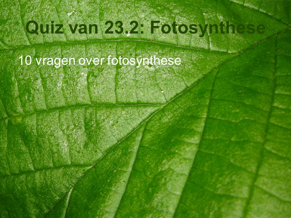Quiz van 23.2: Fotosynthese