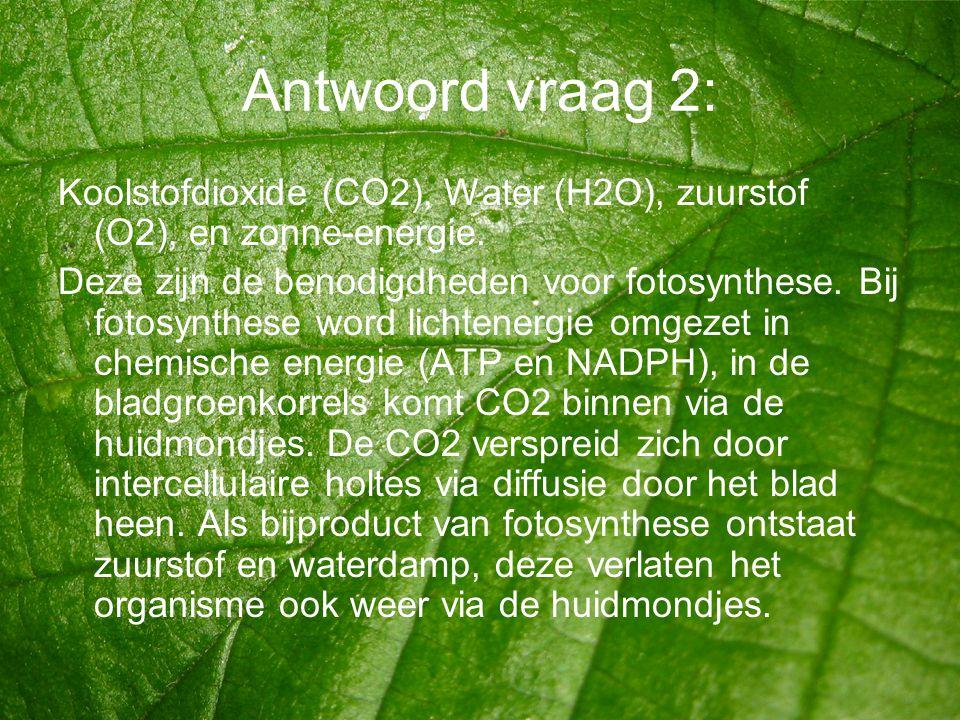 Antwoord vraag 2: Koolstofdioxide (CO2), Water (H2O), zuurstof (O2), en zonne-energie.