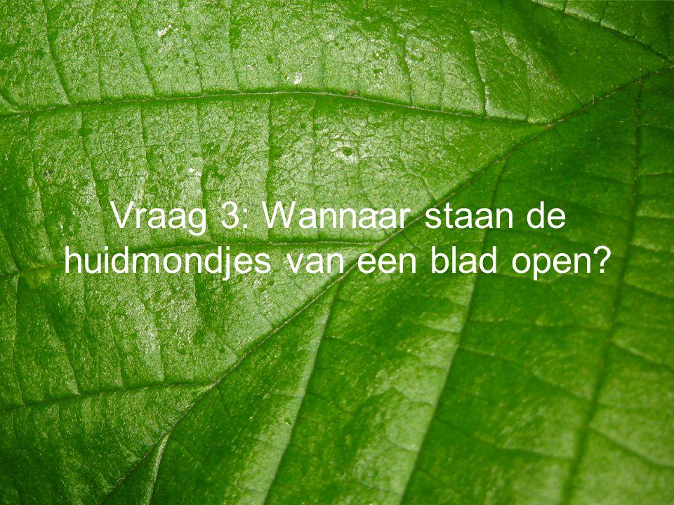 Vraag 3: Wannaar staan de huidmondjes van een blad open