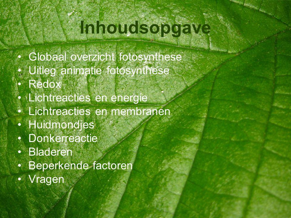 Inhoudsopgave Globaal overzicht fotosynthese