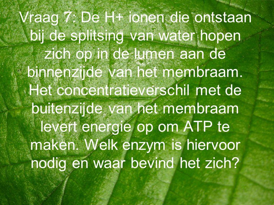 Vraag 7: De H+ ionen die ontstaan bij de splitsing van water hopen zich op in de lumen aan de binnenzijde van het membraam.