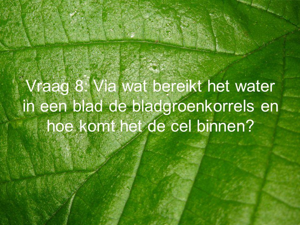 Vraag 8: Via wat bereikt het water in een blad de bladgroenkorrels en hoe komt het de cel binnen