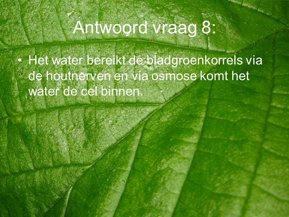 Antwoord vraag 8: Het water bereikt de bladgroenkorrels via de houtnerven en via osmose komt het water de cel binnen.