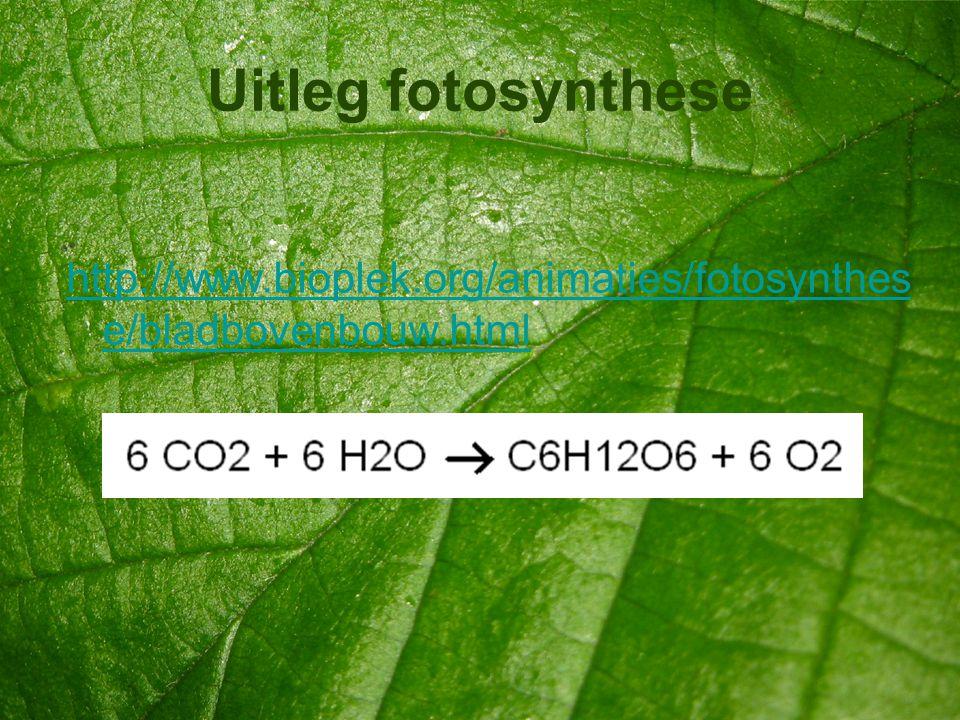 Uitleg fotosynthese http://www.bioplek.org/animaties/fotosynthese/bladbovenbouw.html
