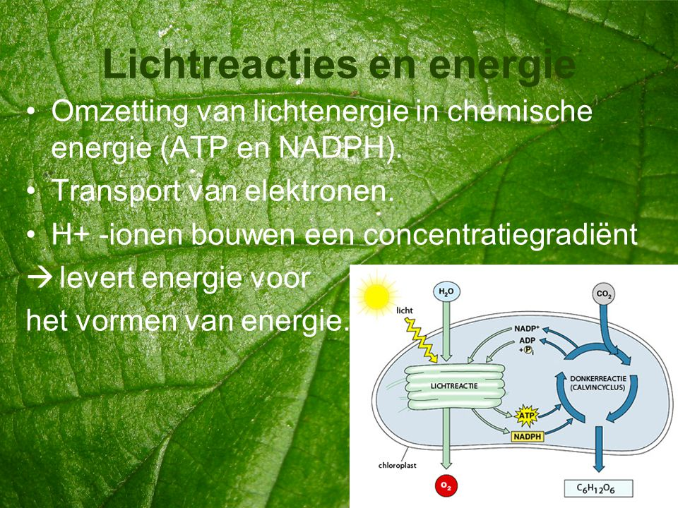 Lichtreacties en energie