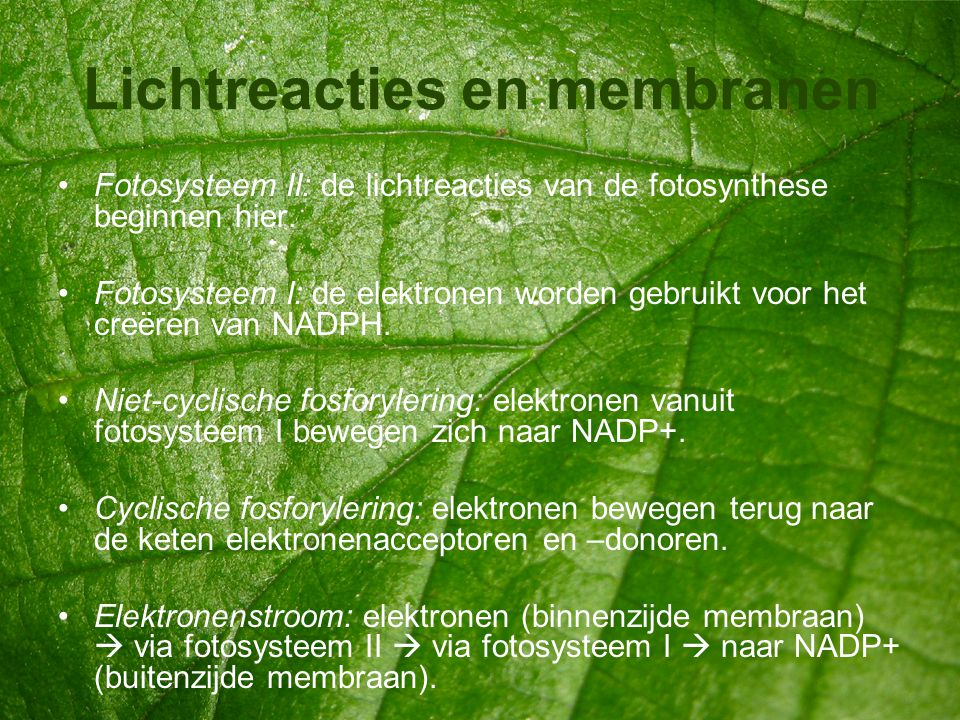 Lichtreacties en membranen