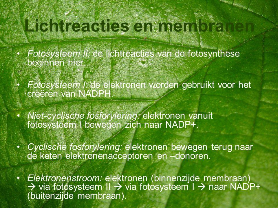 Lichtreacties en membranen