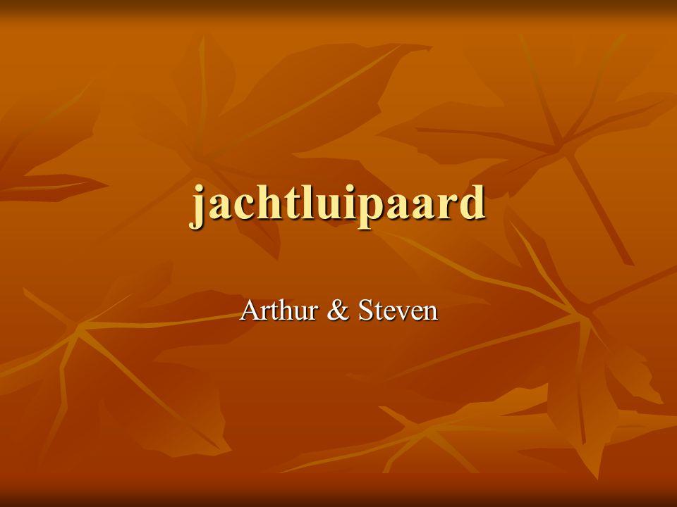 jachtluipaard Arthur & Steven