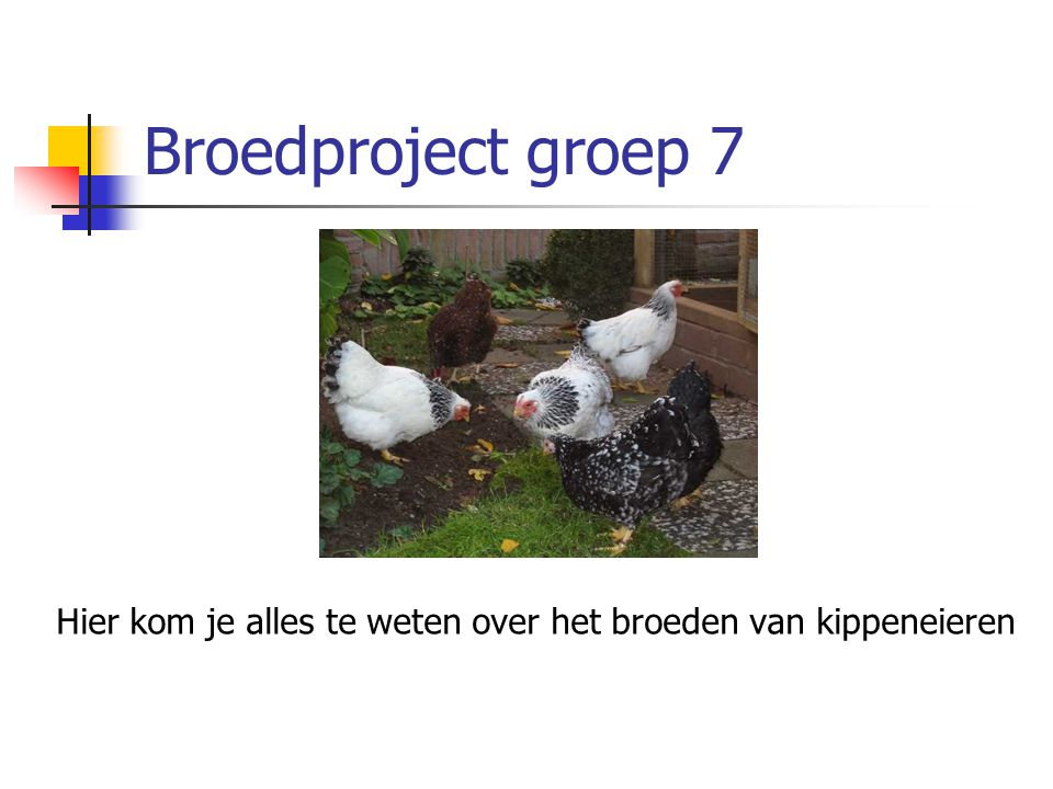 Broedproject groep 7 Hier kom je alles te weten over het broeden van kippeneieren