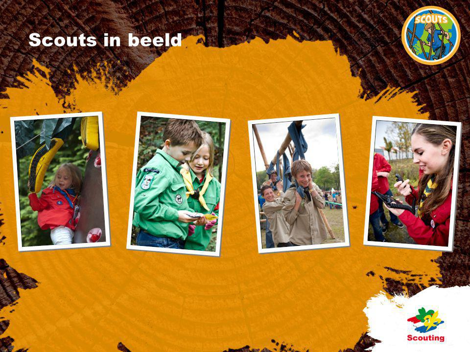 Scouts in beeld