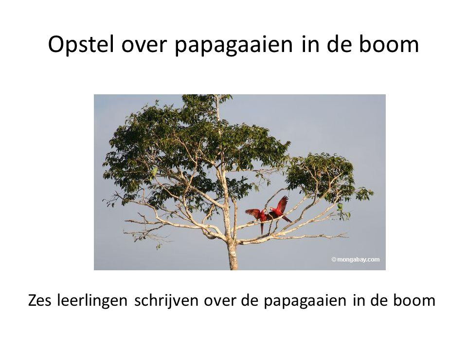 Opstel over papagaaien in de boom