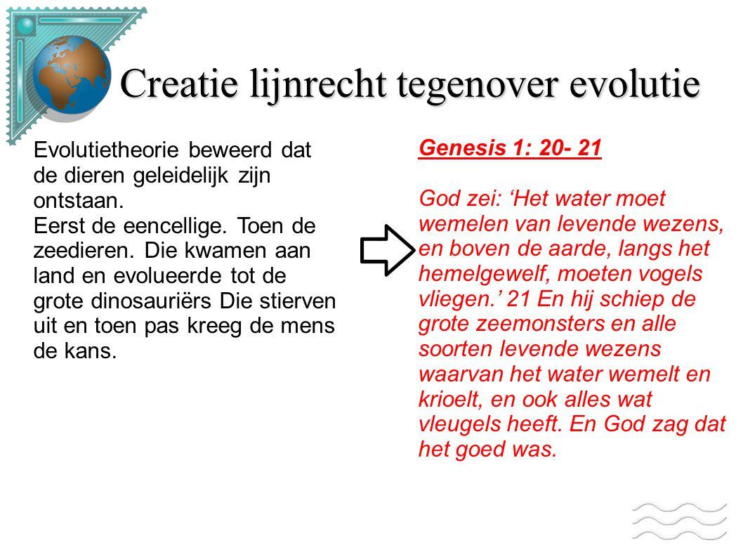 Creatie lijnrecht tegenover evolutie