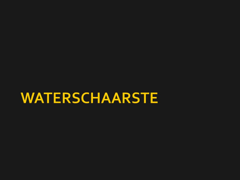 WATERSCHAARSTE