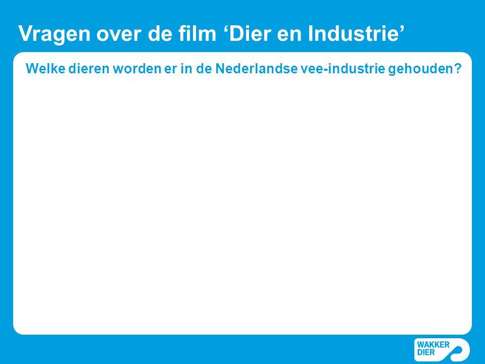Welke dieren worden er in de Nederlandse vee-industrie gehouden