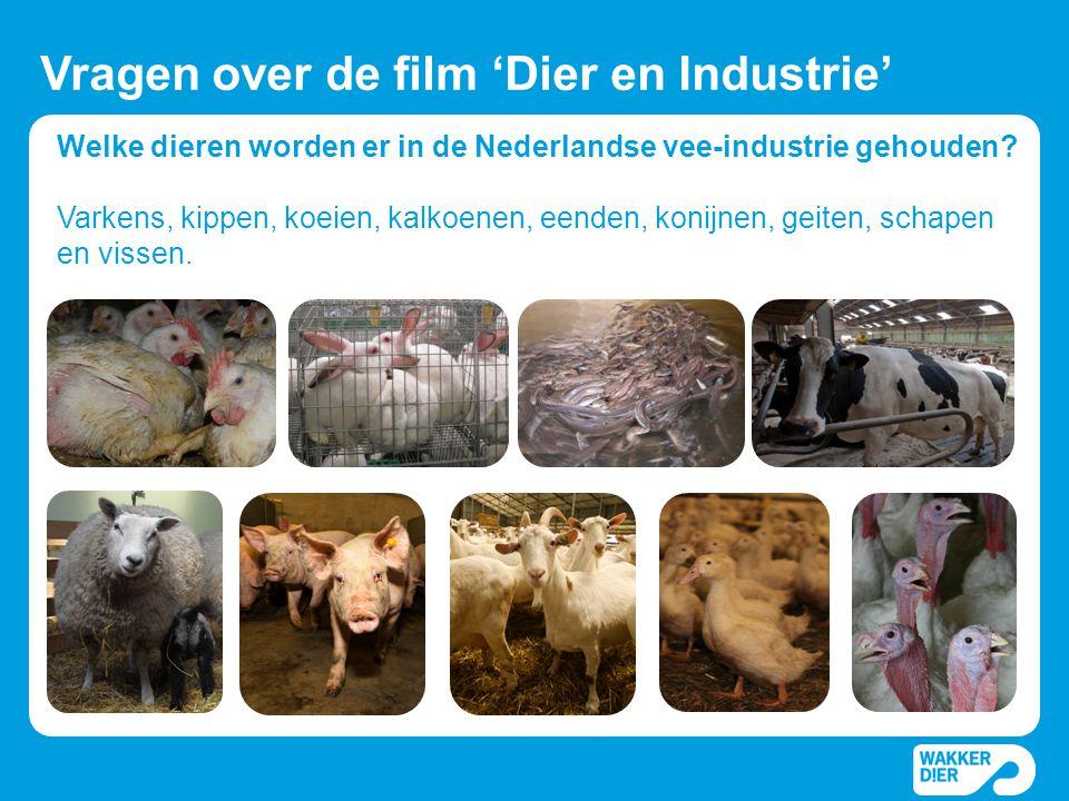 Vragen over de film 'Dier en Industrie'