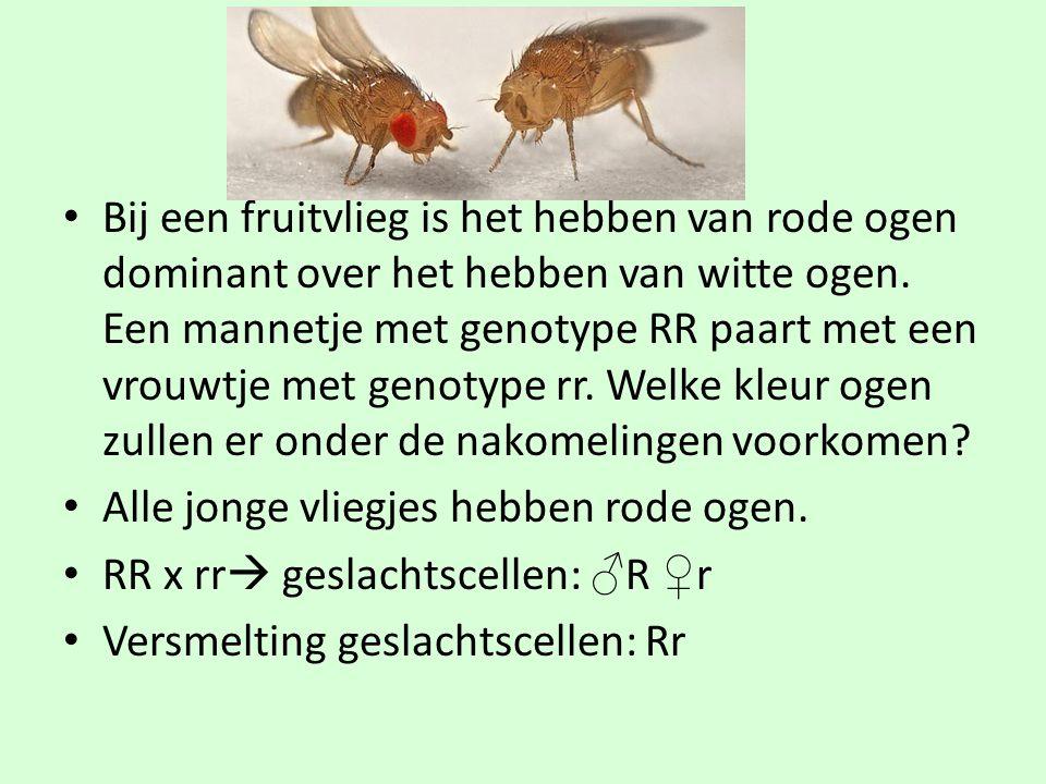 Bij een fruitvlieg is het hebben van rode ogen dominant over het hebben van witte ogen. Een mannetje met genotype RR paart met een vrouwtje met genotype rr. Welke kleur ogen zullen er onder de nakomelingen voorkomen