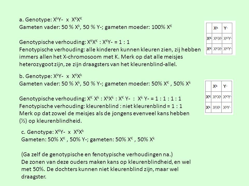 a. Genotype: XkY- x XKXK Gameten vader: 50 % Xk, 50 % Y-; gameten moeder: 100% XK. Genotypische verhouding: XKXK : XKY- = 1 : 1.