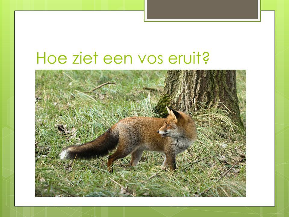 De vos spreekbeurt juf olga ppt download - Hoe een verf kleur voorbereiden ...