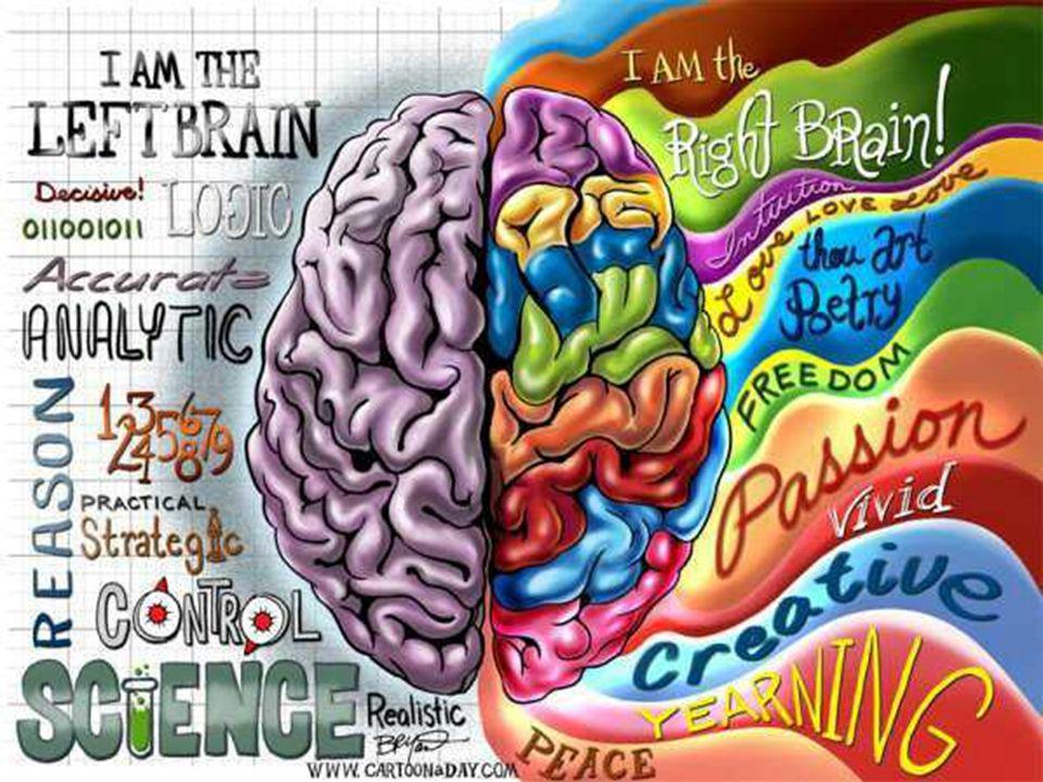 De hersenen/ jouw brein