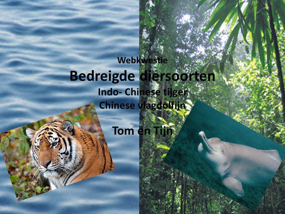 Webkwestie Bedreigde diersoorten Indo- Chinese tijger Chinese vlagdolfijn