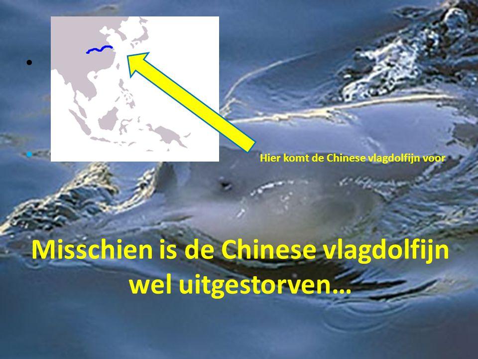 Misschien is de Chinese vlagdolfijn wel uitgestorven…