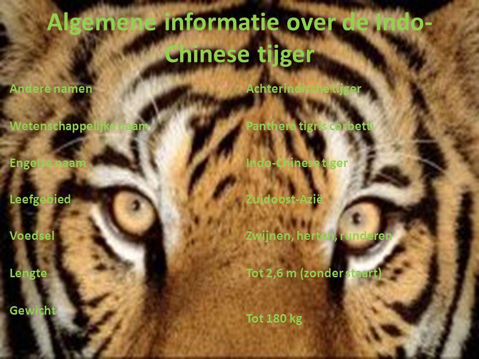 Algemene informatie over de Indo-Chinese tijger