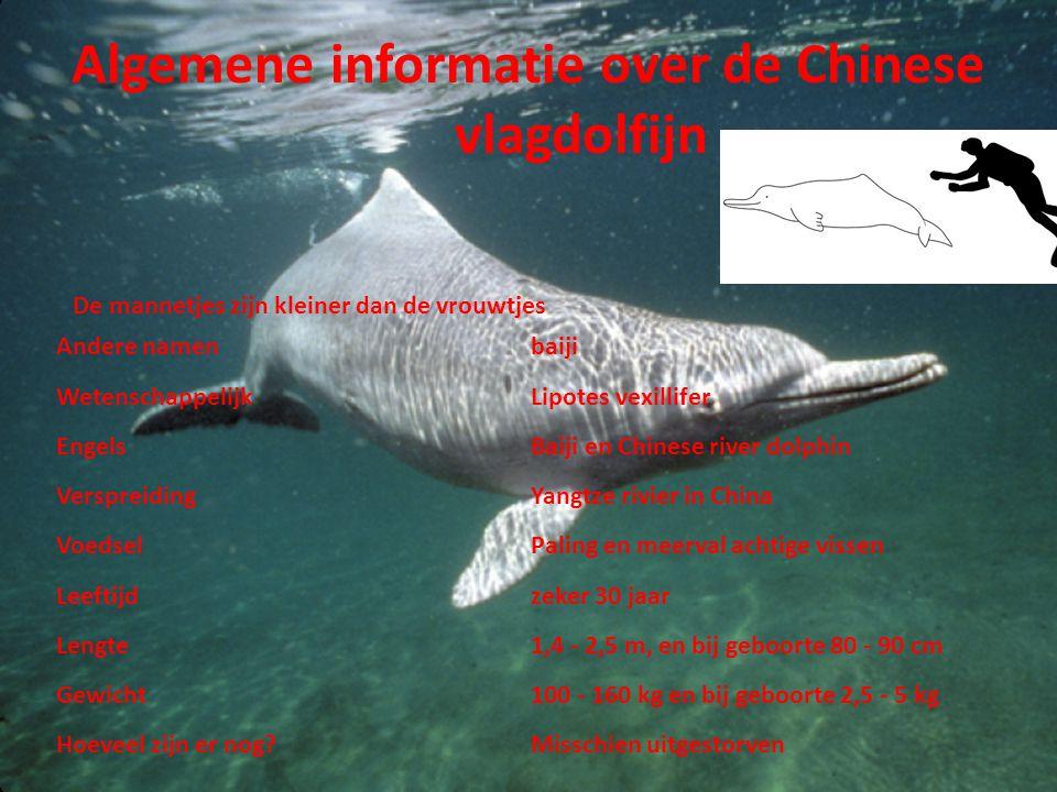 Algemene informatie over de Chinese vlagdolfijn