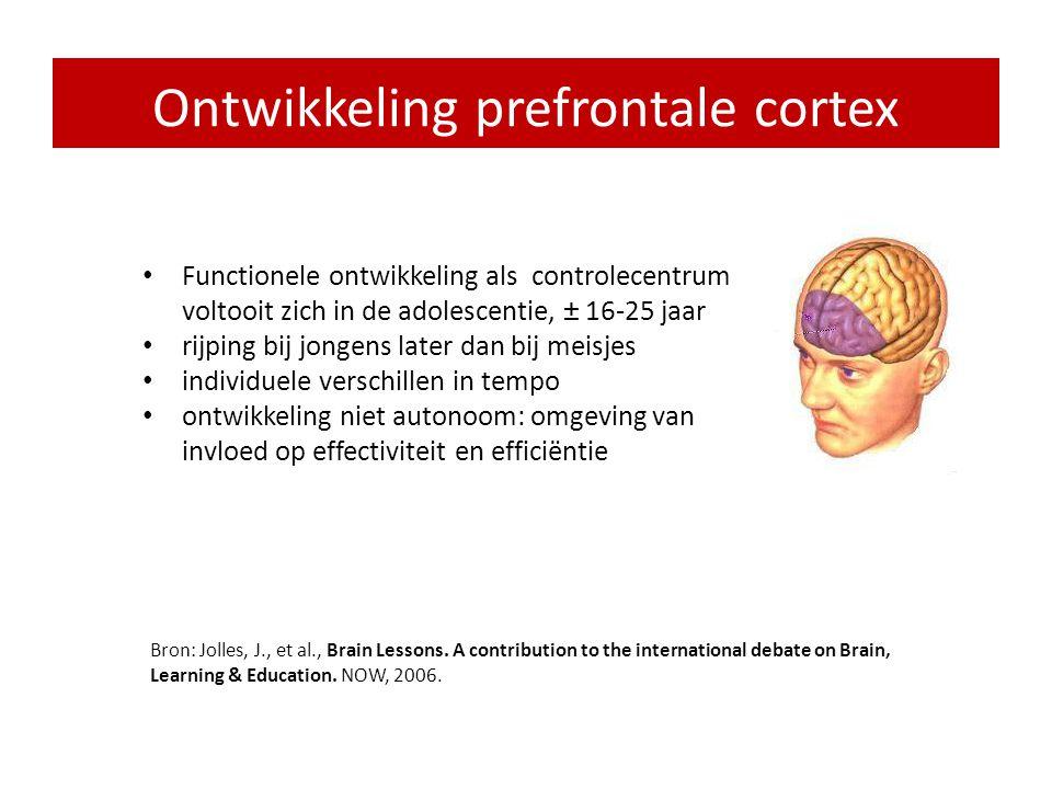 Ontwikkeling prefrontale cortex