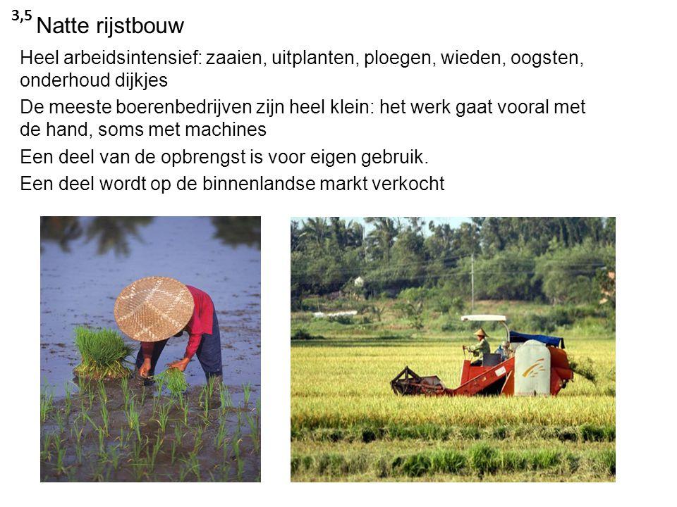3,5 Natte rijstbouw. Heel arbeidsintensief: zaaien, uitplanten, ploegen, wieden, oogsten, onderhoud dijkjes.
