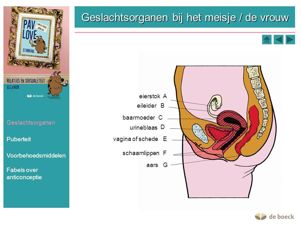 Geslachtsorganen bij het meisje / de vrouw