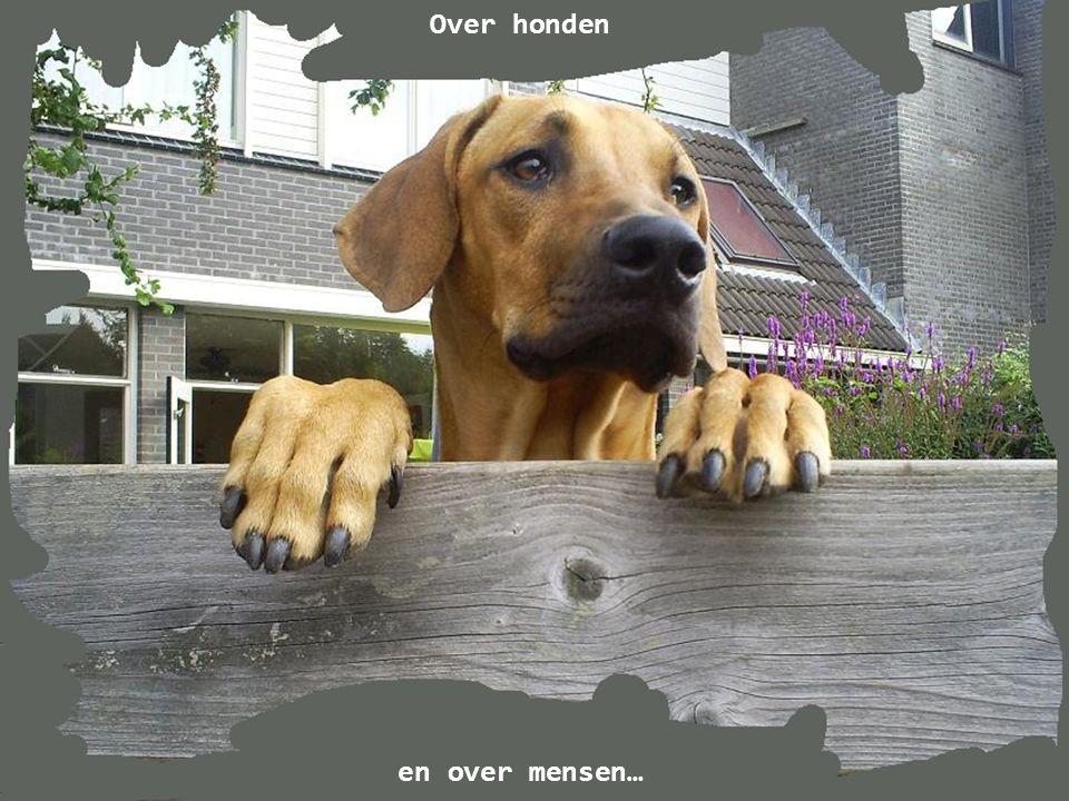 Over honden en over mensen…