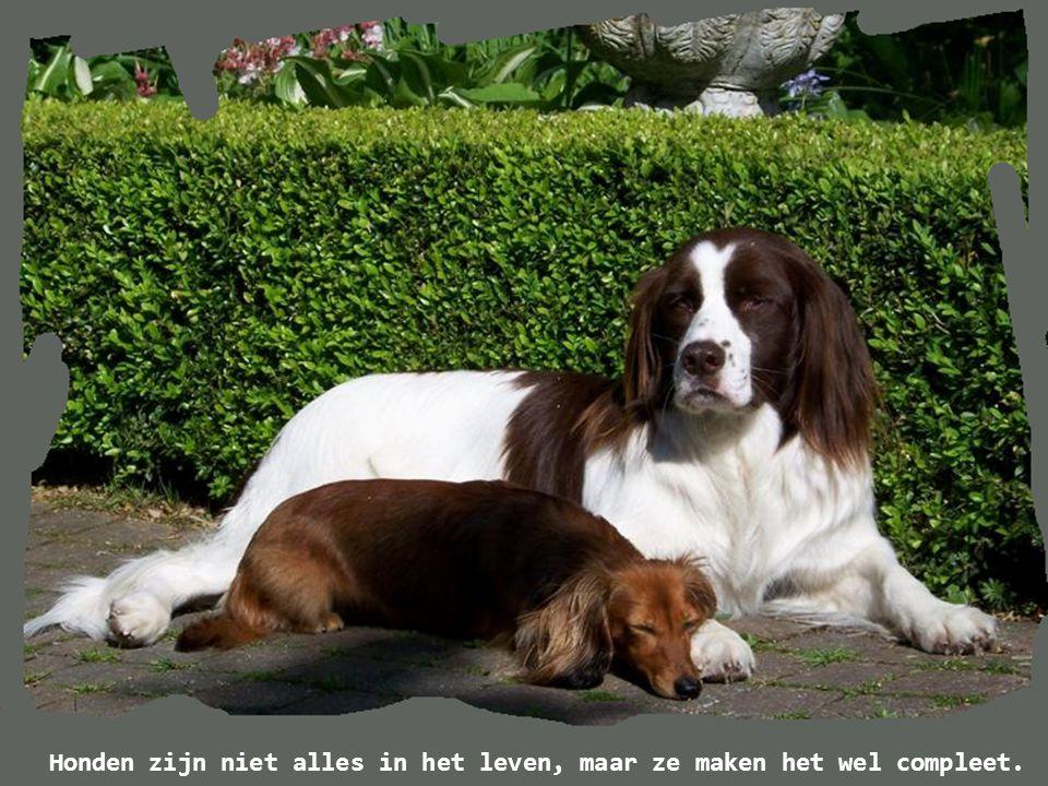 Honden zijn niet alles in het leven, maar ze maken het wel compleet.