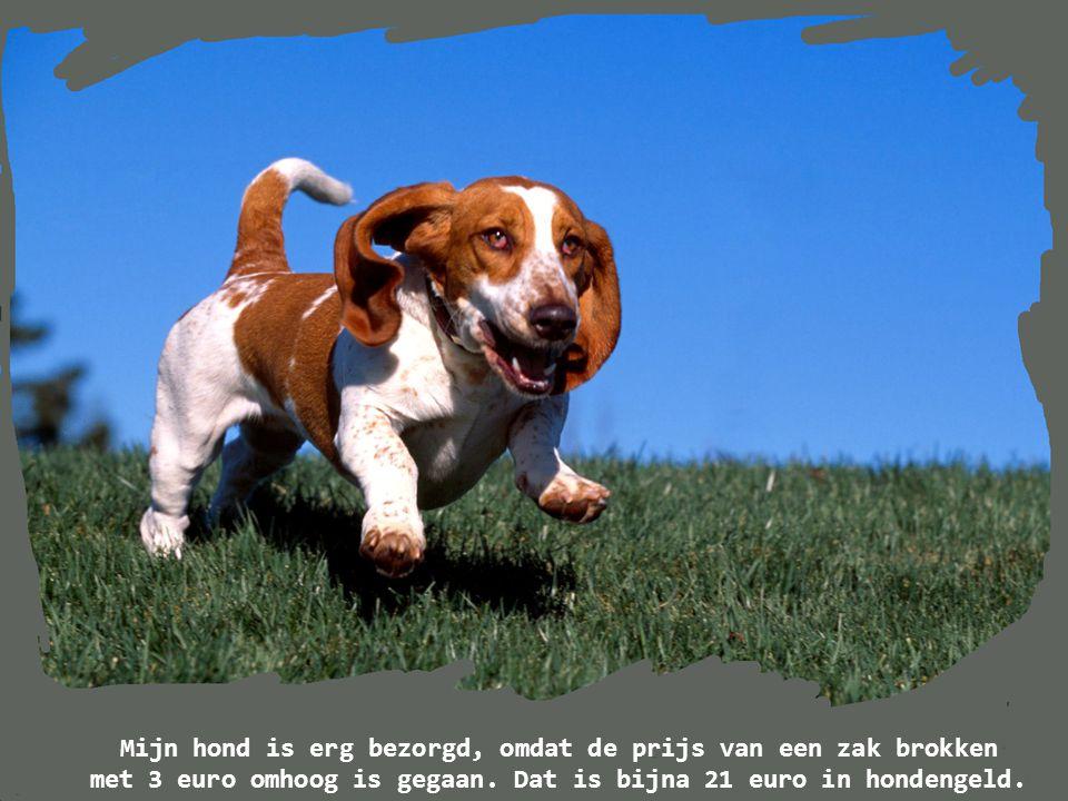 Mijn hond is erg bezorgd, omdat de prijs van een zak brokken met 3 euro omhoog is gegaan.