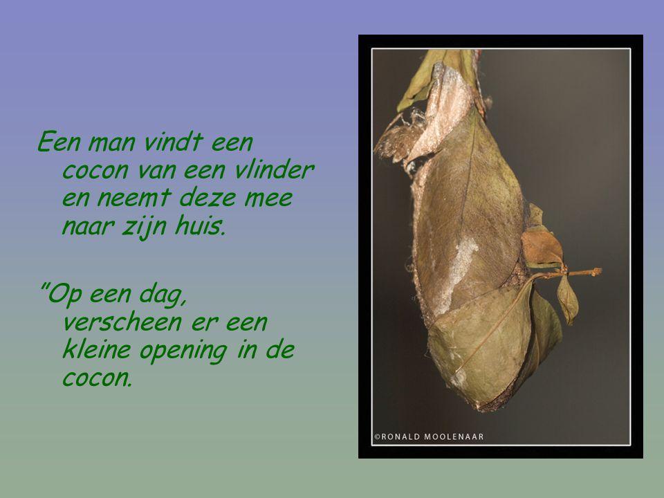 Een man vindt een cocon van een vlinder en neemt deze mee naar zijn huis.