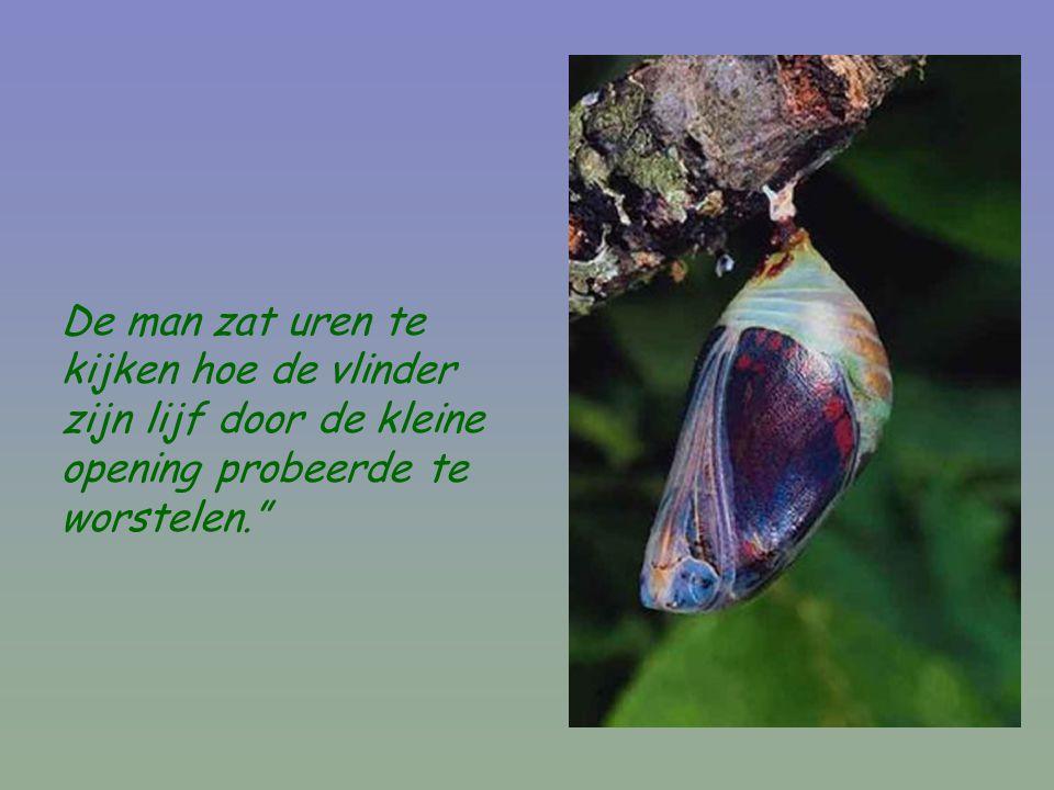 De man zat uren te kijken hoe de vlinder zijn lijf door de kleine opening probeerde te worstelen.