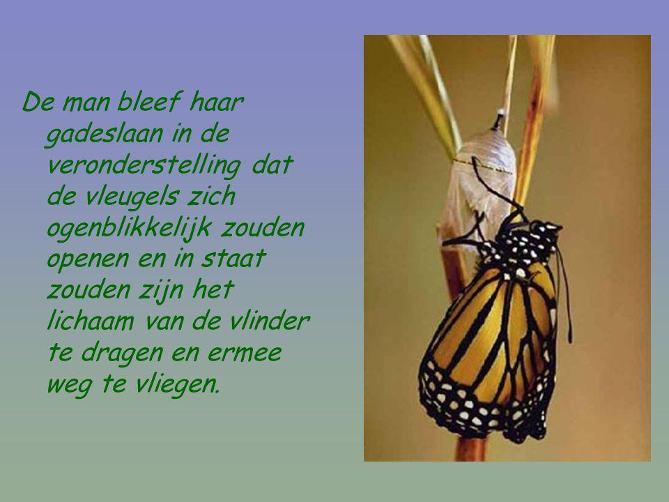 De man bleef haar gadeslaan in de veronderstelling dat de vleugels zich ogenblikkelijk zouden openen en in staat zouden zijn het lichaam van de vlinder te dragen en ermee weg te vliegen.