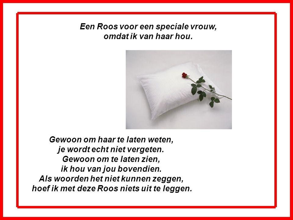 Een Roos voor een speciale vrouw, omdat ik van haar hou.